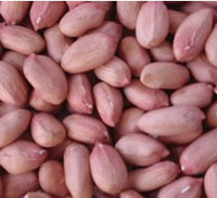 new crop cheap artificial peanut for sale , factory price