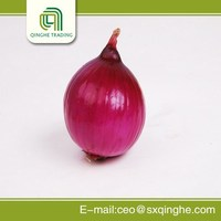 New design fresh onion export to dubai made in China