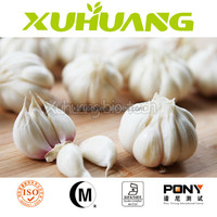 best price Allium Sativum L/allicin powder soluble/Garlic Extract