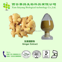 Chinese high quality dried ginger extract powder
