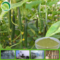 Water Soluble Cucumber Extract