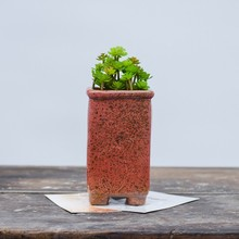 disposable plastic garden succulent ceramic pots for plants