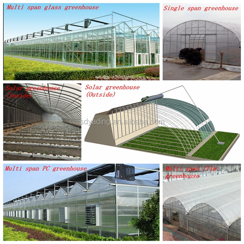 Agriculture tunnel plastic tomato commercial greenhouse