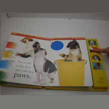animal board book for kids
