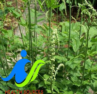 Anti-cancer Products Herbal Black Cohosh P.E. Triterpene Glycosides