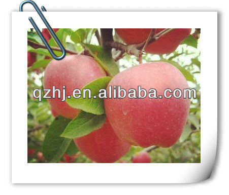 2012 New Red Star Apple
