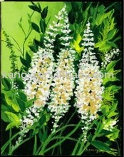 Black Cohosh Extract triterpenoid saponis 2.5%, 5%, 8%