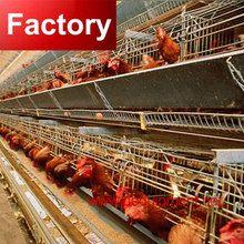 DT commercial poultry farming equipment and chicken cage