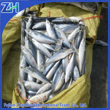 frozen whole round mackerel tin cheap frozen seafood fish