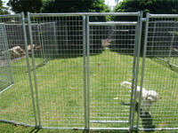 dog kennels / dog cages / wire mesh fencing for dog