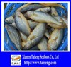 frozen yellow croaker fish as fresh seafoods