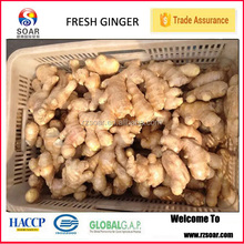 Chinese mature ginger root , air dry ginger root for sale