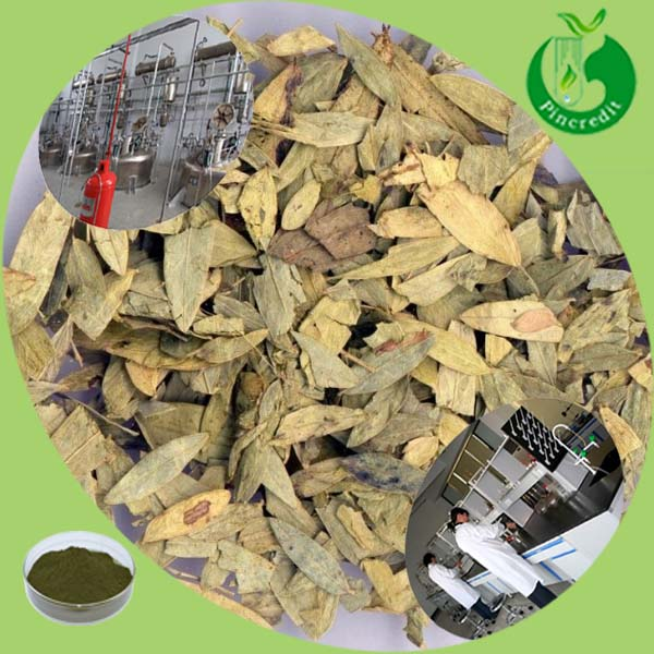 100% Natural Product for Consipation Senna Extract Powder/Senna Leaf