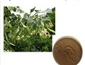100% Natural Miquel Linden Flower Extract