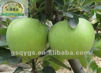 Types of green apples Qinguan apple