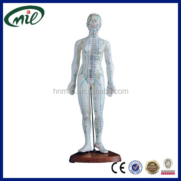Acupuncture human body model male acupuncture model 48cm female acupuncture model