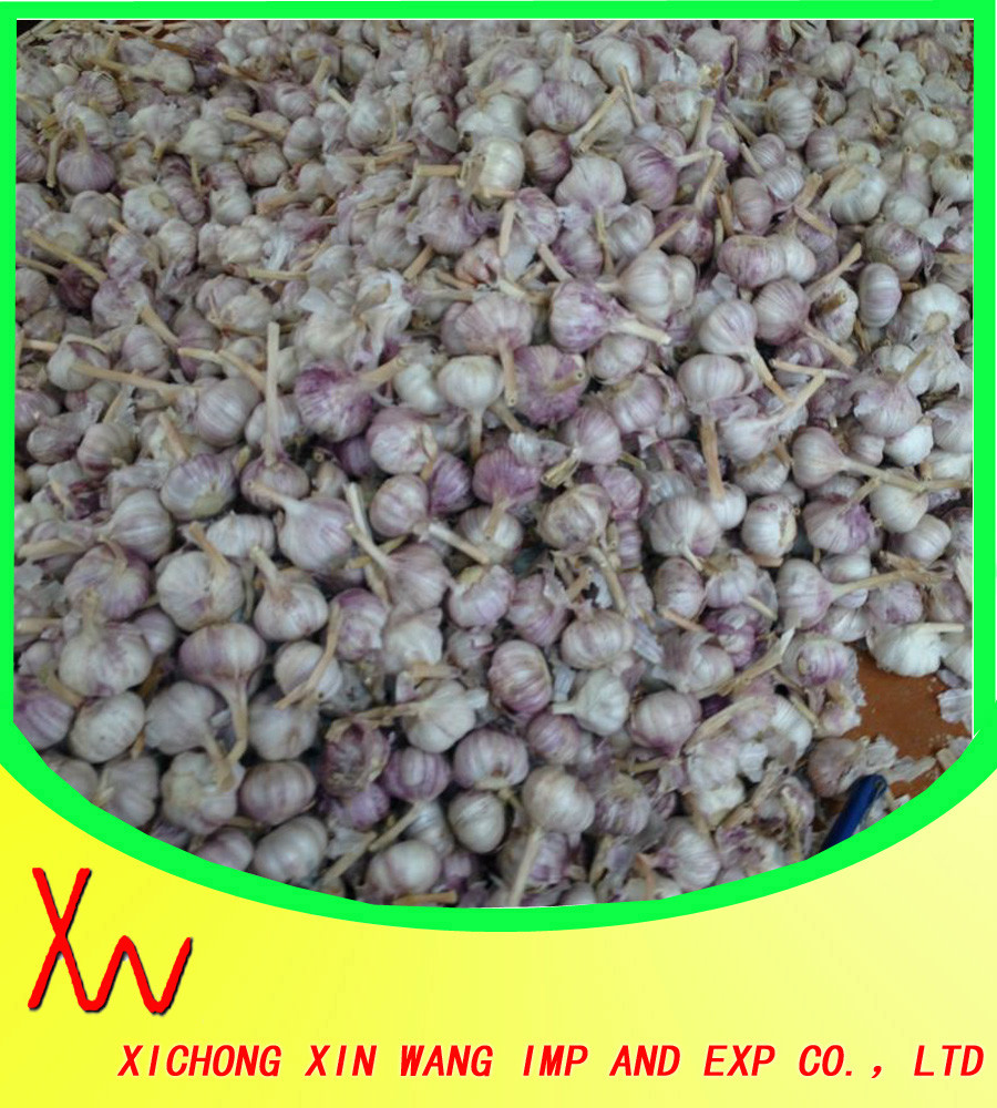 2015 new galic good quality china garlic