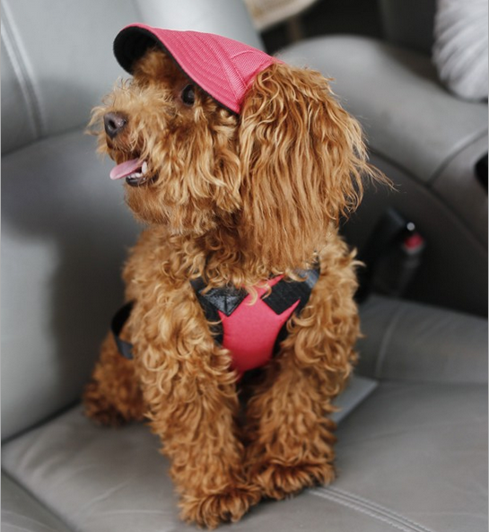 Hot sell dog baseball hat summer dog cap breathable baseball dog cap wholesale
