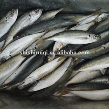 high quality seafood new catching horse mackerel fish 4/6