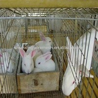 PVC Coated Rabbit Cage