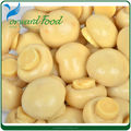 fresh mushroom in can tin canned mushroom China supplier
