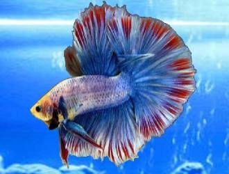 Discus fish and others ornamental fish