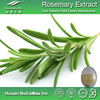 Hot sale Plant extract Rosmarinus officinalis extract/Rosemary oleoresin extract/Rosemary leaf extract