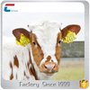 UHF Animal Tag Ear Tag Identify Animal Information RFID for Cow and Sheep