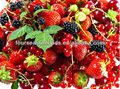 good quality frozen fruit&vegetable,China supplier