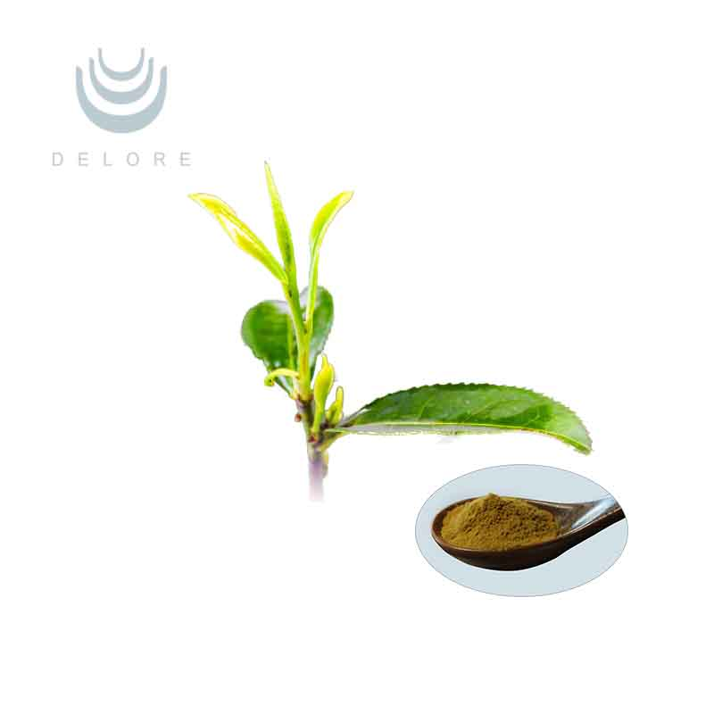 Organic Green tea extract with active ingredients EGCG/ L-theanine//Tea Polyphenol