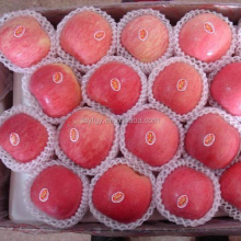 Chinese Fresh Fuji apple with best price for export