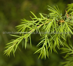 Excellent Quality & Reasonable Price of Juniper Leaf Essential Oil