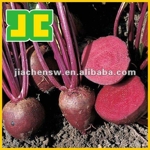 100% natural Beet Red Color