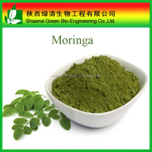Bulk Natural Plant Extract Moringa Powder Moringa Juice Powder