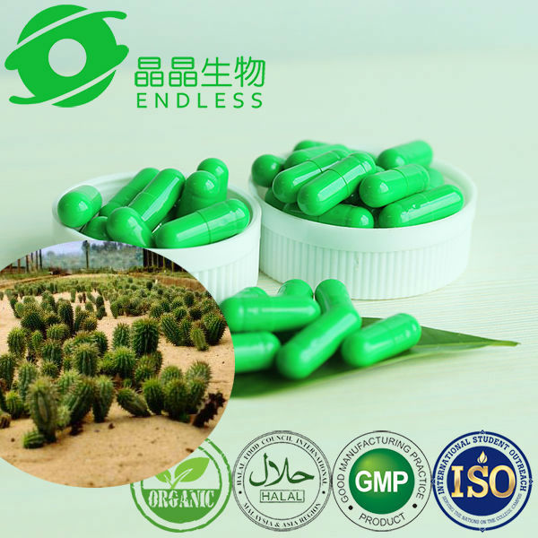 pure hoodia gordonii 500mg Capsules/Supplement Extract good quality
