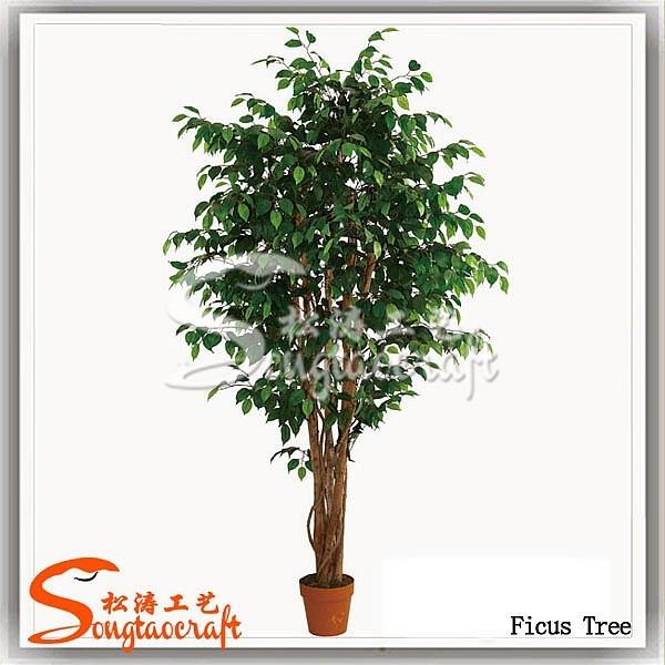 6ft r el robuste taille diff rente de ficus bonsai for Bonsai artificiel grande taille