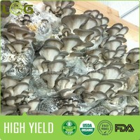 hot sale rich harvest oyster mushroom growing bags for growing fresh oyster with competitive price