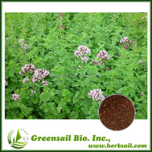 Purple flower oregano seed for growing