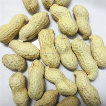 Unprocessed raw organic groundnut, big kernel inside peanuts in shell