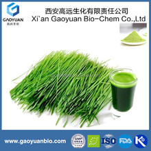 Free Sample 100% Natural Wheat Grass Seed Extract 98% Hordenine Hordeum Vulgare Extract Barely Malt Extract