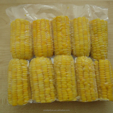 GOOD PRICE HIGH QUALITY ORGANIC FROZEN SWEET CORN COB