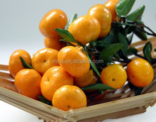 chinese citrus fruits
