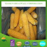 frozen corn cob whole from China