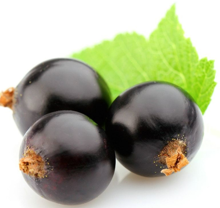 High Quality Pure Bulk black currant seed oil