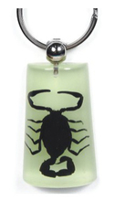 Hot sale unique REAL insect scorpion keyring