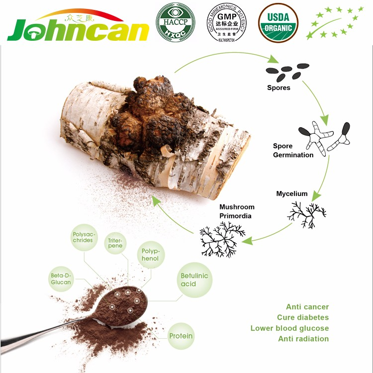 Pure Natural Unique Health Care Product Chaga Mushrooms Price