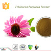 Skin beautifying product cGMP FDA Kosher HACCP supplier 4% chicoric acid powdered echinacea purpurea extract in bulk