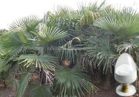 Hot selling plant extract new coming extract saw palmetto in india