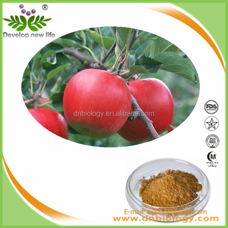 Widely Used in Healthcare Supplement Feild Apple Powder Certified Chinese herbal extract