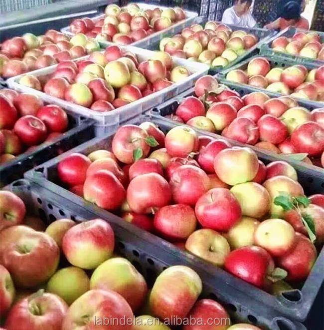 crispy and juicy summer fruit red gala apple on sale